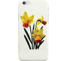 Three Daffodils iPhone Case/Skin