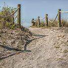 The Pathway to Turtle Beach  by John  Kapusta