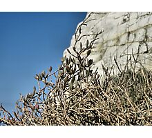 White cliffs, blue skies Photographic Print