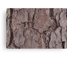 Barking up the Wrong Tree Canvas Print