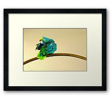 Yellow Crowned Parrot Framed Print