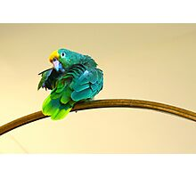 Yellow Crowned Parrot Photographic Print