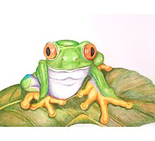 Frog on a leaf Photographic Print