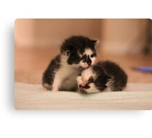 Two Little Kittens Canvas Print