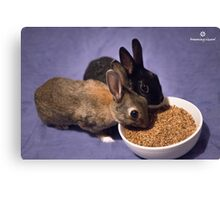 Rabbits Eating Spent Grains Canvas Print