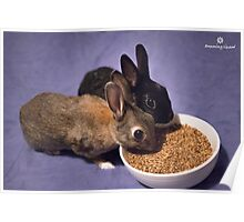 Rabbits Eating Spent Grains Poster