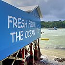 Mangonui - so fresh the fish winks at you from the plate ...! by Roy  Massicks