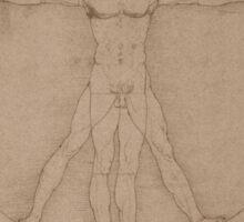 Vitruvian Man -- Leonardo da Vinci Sticker