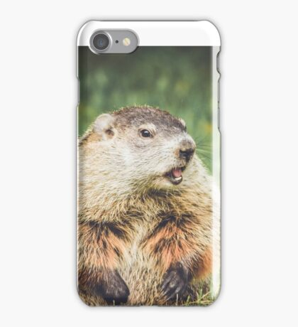 Groundhog in vintage garden setting iPhone Case/Skin