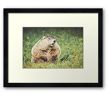 Groundhog in vintage garden setting Framed Print