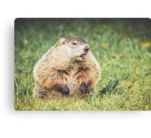 Groundhog in vintage garden setting Canvas Print