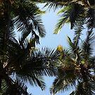 Palm Sky by Amrita Neelakantan