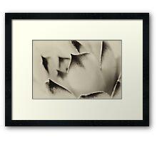 Nature Peek - no.86 Framed Print