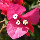 Beautiful pink by Ana Belaj