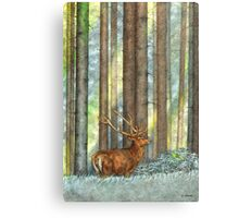 In the Old Forest Canvas Print