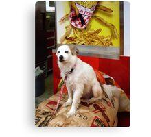 Dog At Carnival Canvas Print