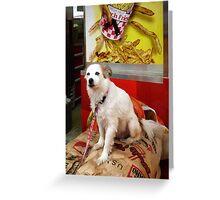 Dog At Carnival Greeting Card