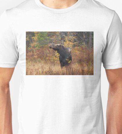 Shy - Canadian Moose - Algonquin Park, Canada T-Shirt