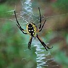 zig zag web by Tracey Hampton