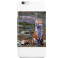 Fox Zen - Algonquin Park, Canada iPhone Case/Skin