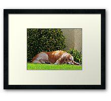 Dog Relaxing Framed Print