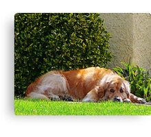 Dog Relaxing Canvas Print