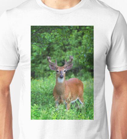 Spring Buck - White-tailed deer T-Shirt