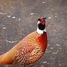 Watch The Birdie? by Nik Watt