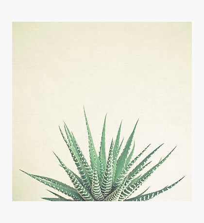 Haworthia Photographic Print