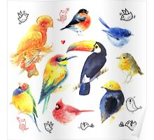 Watercolor a variety of birds  Poster
