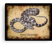 Anery Cornsnake Canvas Print