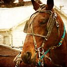 Amish Horse November 2011 by angelandspot