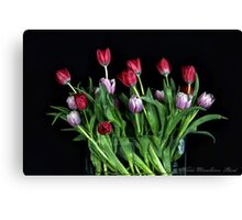 Spring Mayhem Canvas Print