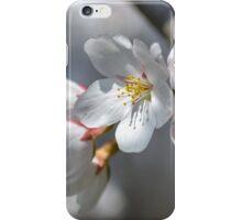 Spring flowers iPhone Case/Skin