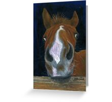 Nosy Foal Greeting Card