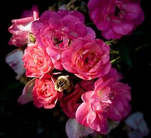 Tea Roses  by G. Patrick Colvin
