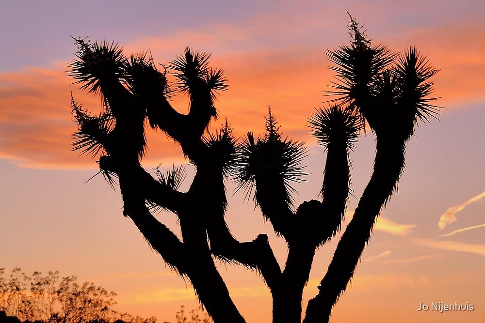 Joshua Tree Sunset by Jo Nijenhuis