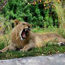 yawn by Tracey Hampton