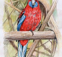 Morning Tea: Crimson rosella by Aakheperure