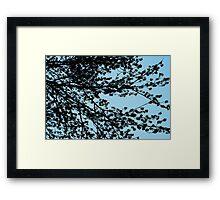 Tree Sillhouette Framed Print