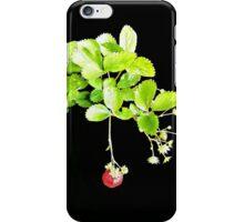 Fragaria × ananassa iPhone Case/Skin