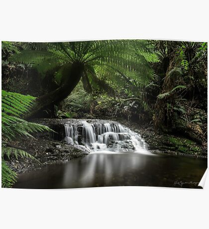 Rainforest Reflections Poster