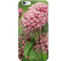 Beautiful blooming Milkweed loved by Monarchs iPhone Case/Skin