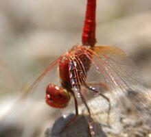 Dragonfly Handstand Sticker