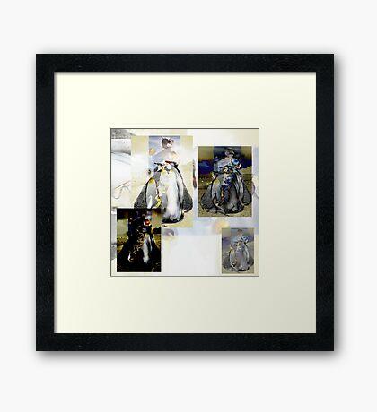 Penguin Divas  Framed Print