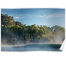 Morning at the swamp Poster