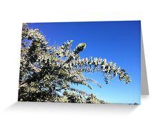 Acacia Greeting Card