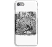 Vintage Peacock Birds Illustration Retro 1800s Black and White Peacocks Bird Image iPhone Case/Skin