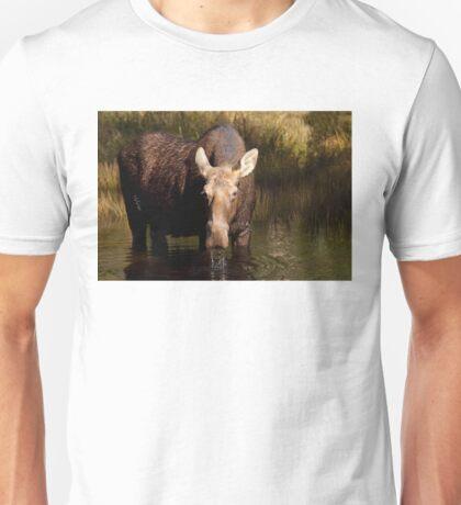 Moose - Algonquin Park, Canada T-Shirt