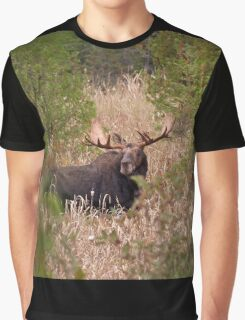 Moose in rut - Algonquin Park, Canada Graphic T-Shirt